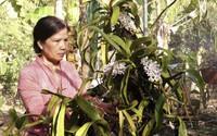Đam mê trồng lan, người phụ nữ biến đất rẫy thành vườn lan bạc tỷ