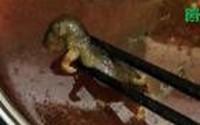 Bỏ xác chuột chết vào nồi lẩu, đòi nhà hàng bồi thường 17 tỷ đồng