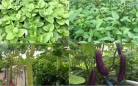 Tháng 4, nên trồng rau củ gì để cả nhà ăn mãi không hết?