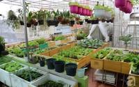 Khu vườn đủ loại rau xanh, trái ngọt không khác gì một trang trại thu nhỏ trên sân thượng của bà mẹ hai con ở Hải Phòng