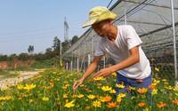 Thuê đất trồng hoa mà làm ra 300 triệu đồng mỗi năm