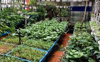10.000 đồng cứu vườn rau sân thượng suốt mùa hè nắng nóng