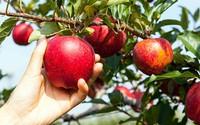 Câu chuyện tư duy về quả táo xác định ai giàu, ai nghèo
