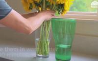 """6 mẹo """"thần thánh"""" giúp hồi sinh hoa héo trong 3s, người bán hoa không bao giờ nói cho bạn"""