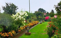 Đòi chồng mua vườn tận bên Đức, mẹ Việt gây bất ngờ sau 3 năm học cuốc đất trồng hoa