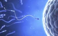 Giải mã cuộc đua của hơn 250 triệu tinh trùng để gặp trứng