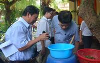 Nhận diện loại muỗi truyền bệnh sốt xuất huyết