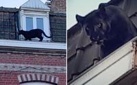 Thấy vật đen lù lù trên mái nhà, người dân chết khiếp khi biết sự thật