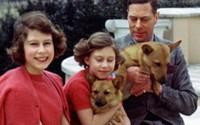Bố Nữ hoàng Anh từng không muốn gả chồng cho con