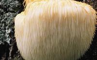 """Vì sao các chuyên gia gọi nấm là """"món ăn của thượng đế""""?"""