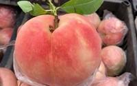 """""""Đào tiên"""" bán tràn lan từ chợ dân sinh đến cửa hàng hoa quả nhập khẩu với giá cả chênh lệch đến trăm nghìn/kg"""