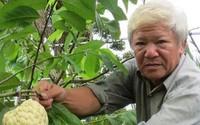 Lão nông kiếm bộn tiền với vườn mãng cầu dai cho trái 'khổng lồ'