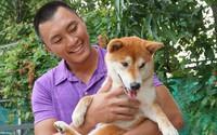 Giống chó Shiba được chọn đóng cậu Vàng: Ăn cá hồi, ngủ điều hòa, giá nghìn USD