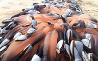 """Choáng với cái giá """"trên trời"""" của những loài sinh vật biển đắt nhất thế giới"""