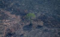 Ngoài Tổng thống Brazil, đằng sau còn một người gây ra vụ cháy rừng Amazon