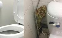 Quên sáp thơm đi, đây là 4 sản phẩm thiên nhiên khiến nhà vệ sinh thơm suốt tuần mà chẳng tốn nhiều tiền