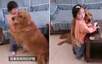 Chó vỗ về cô chủ bị mắng