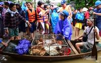 Hình ảnh chạy lũ của người dân Quảng Bình, Hà Tĩnh