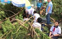 Công ty Công viên cây xanh TP.HCM nói gì sau vụ nam sinh tử vong vì cây phượng đổ trong sân trường?