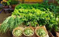 Bí quyết trộn đất giản đơn mà hiệu quả giúp khu vườn 70m² trồng cây gì cũng tốt tươi xanh mát của mẹ đảm ở Huế