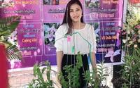 Đam mê lan đột biến, cô giáo tiểu học Phú Thọ bạo tay chi gần 3 tỷ mua 4 chậu lan Bạch Tuyết và Hiển Oanh 5 cánh trắng về vườn nhà