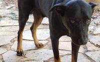"""Vụ """"2 con báo đen"""": Có thể người dân nhìn nhầm khi thấy 2 con chó đen!"""