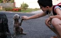 Con trai ngày nào cũng biến mất khỏi nhà, ông bố tò mò theo dõi con thì phát hiện việc làm xúc động của cậu bé