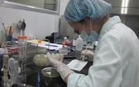 Nghiên cứu vaccine phòng cúm A/H5N1: Chặng đường dài gần đến đích