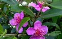 Ngắm những bông hoa tuyệt đẹp có công dụng trị bệnh không ngờ