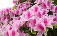 14 loài hoa tuyệt đẹp có tác dụng trị bệnh không ngờ