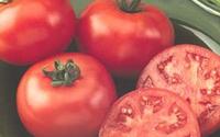 Tác dụng chữa bệnh của cà chua
