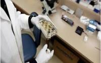 Hàn Quốc phát triển thuốc điều trị ung thư mới