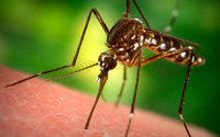 """Tại sao muỗi """"thích"""" cắn bạn?"""