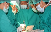 Khám, phẫu thuật tim miễn phí cho bệnh nhân nghèo
