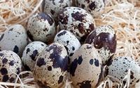 Trứng chim chữa chứng hay quên