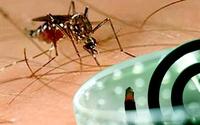 Bác sĩ hướng dẫn cách loại bỏ muỗi kháng thuốc đơn giản bằng hương