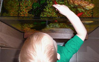 Bé 4 tuổi nhập viện vì bể cá đổ lên đầu