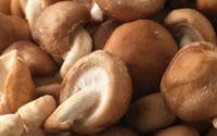Ăn nấm có thể chống ung thư cổ tử cung