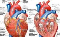 Nhật Bản phát hiện cơ chế phát bệnh viêm cơ tim