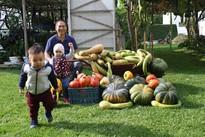 Khu vườn 70m2 trồng đủ loại rau Việt, mùa nào cũng có bầu, bí trĩu trịt của ông bố Việt ở Czech