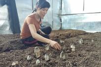 Bỏ tiêu chết, mạo hiểm trồng nấm, người phụ nữ thu gần nửa tỷ