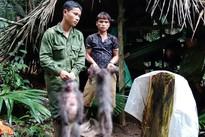 Bắn chết cặp voọc xám quý hiếm, nhóm thợ săn nguy cơ bị phạt 2 tỷ