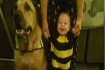 Bé trai bị chó nhà cắn chết vào sinh nhật 1 tuổi