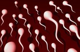 Dấu hiệu nhận biết đàn ông có tinh trùng khoẻ mạnh
