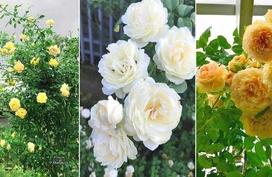 Vườn hồng ngoại