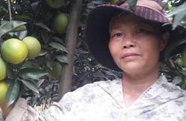 Vườn cam 300 cây trĩu quả, bóng mượt nhờ...thuốc lào