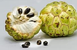 Những trái cây dù ngon đến mấy cũng không được ăn hạt vì sẽ cực kì nguy hại