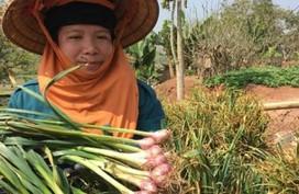 Thuê 1.000 m2 đất trồng tỏi tía, lãi gần 100 triệu/năm