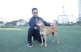 Trang trại nuôi chó Phú Quốc bạc tỷ ở Hà Nội