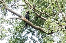 Hàng trăm con chim cổ rắn quý hiếm bất ngờ kéo về trú ngụ tại khu du lịch